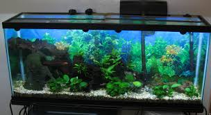 design mesmerizing 55 gallon fish tank for sale plus beautiful