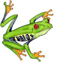 frog drawing free best frog drawing on clipartmag com