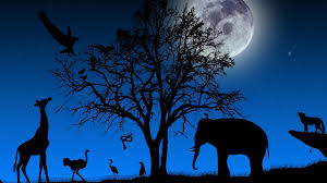 world wildlife day wallpapers hd download
