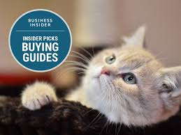 the best cat treats you can buy business insider