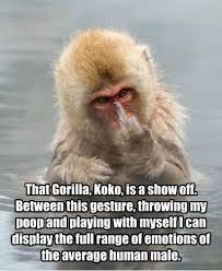 Funny Gorilla Memes - that gorilla koko is a show off funniest memes pinterest meme