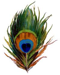 accessories cool image of decorative pack of peacock feather as