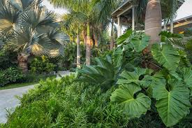 various of tropical plants for tropical garden in the large