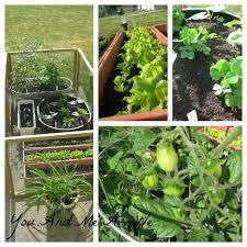 31 best bucket garden images on pinterest vegetable garden