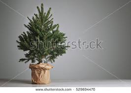 Decorating Christmas Tree Without Lights by Christmas Tree Pot Stock Images Royalty Free Images U0026 Vectors