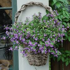 Best Plants For Hanging Baskets by 5 Beautiful Plants For Hanging Baskets