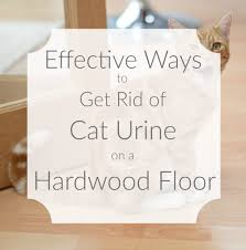 How To Dry Wet Wood Floors Effective Ways To Get Rid Of Cat Urine On A Hardwood Floor Cat