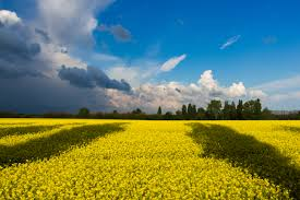 vegetaion images Green field under white and blue clouds during daytime free jpg&a