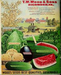 botanical sts seeds catalogs 04946 079 oats cabbage watermelon egg plant