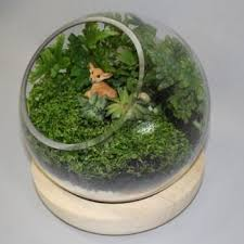 terrarium glass bowl six things