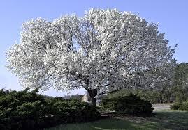 diy terrariums discount trees garden seminars and more