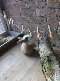 Cool Pets Rabbit Hutch The 25 Best Rabbit Pen Ideas On Pinterest Bunny Hutch Diy