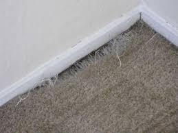 Rug Rakes Gallery Carpet Cleaners Of Reno U0026 Sparkscarpet Cleaners Of Reno