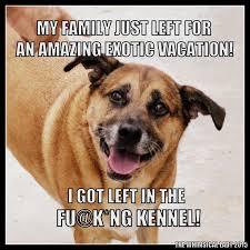 boxer dog meme 71 best shepherd boxer mix images on pinterest animals dogs and