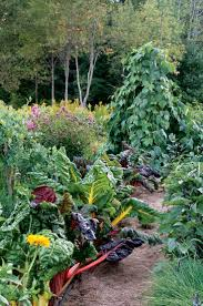 370 best my french potager images on pinterest gardening veggie