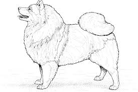 beautiful dog breed coloring pages 74 for picture coloring page
