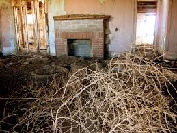 plants native to russia ghost hunting theories monster plants taking over america
