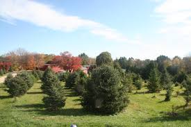 ma christmas tree farms christmas lights decoration