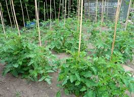 fruit and vegetable garden layout 3 types of planting in rows for your vegetable garden