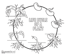 free science coloring pages free science themed coloring pages featuring simple black and