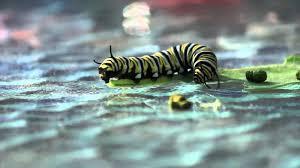 caterpillar youtube
