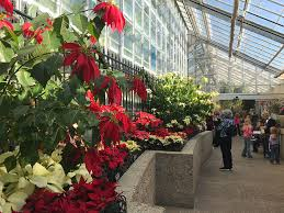 Us Botanic Garden Poinsettias Flourish At The U S Botanic Garden United States
