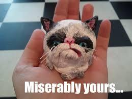 1128 best grumpy cat grumpy images on grumpy