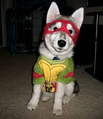 teenage mutant ninja turtle dog costume action hero pet show