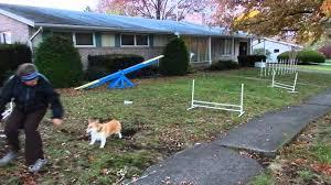 Backyard Agility Course Dog Backyard Agility Youtube