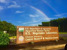 vegetable research usda ars