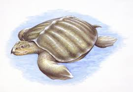 how to draw a sea turtle step by step instructions
