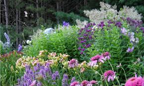 plant paradise country gardens organic garden centre caledon