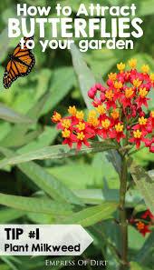 native plants for butterflies 73 best butterfly unit science images on pinterest butterflies