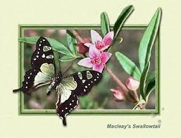 wilde cards butterfly gallery
