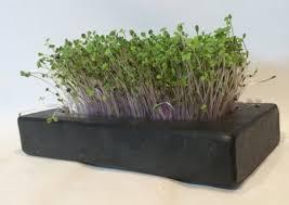 fine indoor vegetable garden kit r and decorating ideas