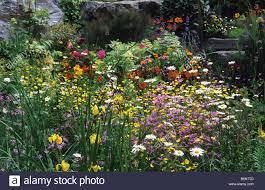 flowery mead stock photos u0026 flowery mead stock images alamy