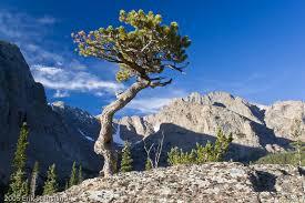 rocky mountain bonsai h loch vale rocky mountain national
