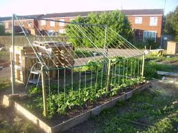 Garden Allotment Ideas Http Chat Allotment Garden Org Gallery 5203 31 05 09 9 48 18