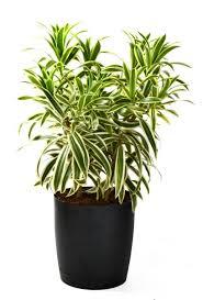 Easy Care Indoor Plants 112 Best Indoor Plant Info Images On Pinterest Indoor Plant