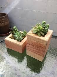 Succulent Planters For Sale by Culture
