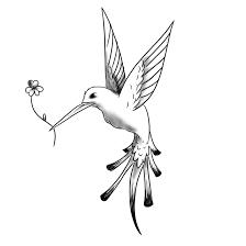 flying hummingbird tattoo sketch design tattoomagz