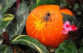 chester zoo u0027s animals get in the halloween spirit liverpool echo
