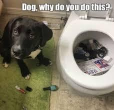 Dog Doctor Meme - dog meme funny and cute dog memes puppy meme