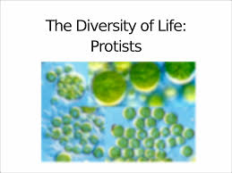 lecture 13 the divesity of life protists the diversity of
