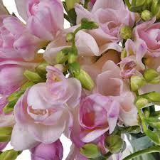 freesia flower designer freesia flower