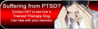 therapy u0026 ptsd service dogs available in ohio