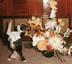 Dog Flower Arrangement Kung Fu Dogs And Vintage Photos On Canvas