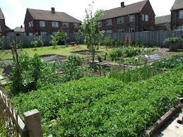veggie park programme