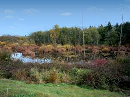 Wetland Resources Of Washington State by The Watershed Company