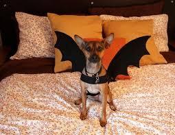 Bat Costume Halloween 15 Bat Costumes Images Costume Ideas Bat
